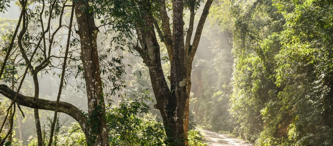 Picture shows the woods with a shinning light. The path to grace and temperance.